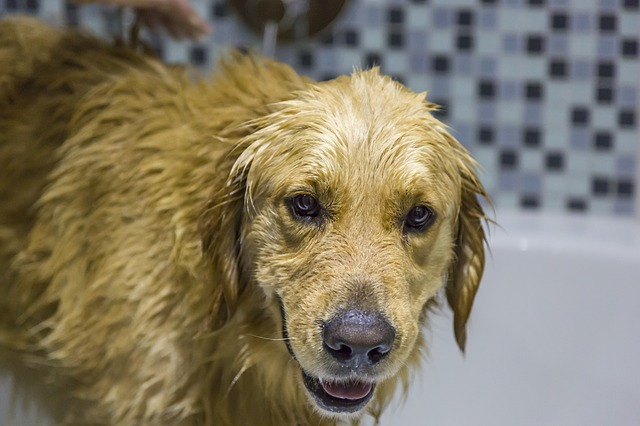 how often should I bathe dog