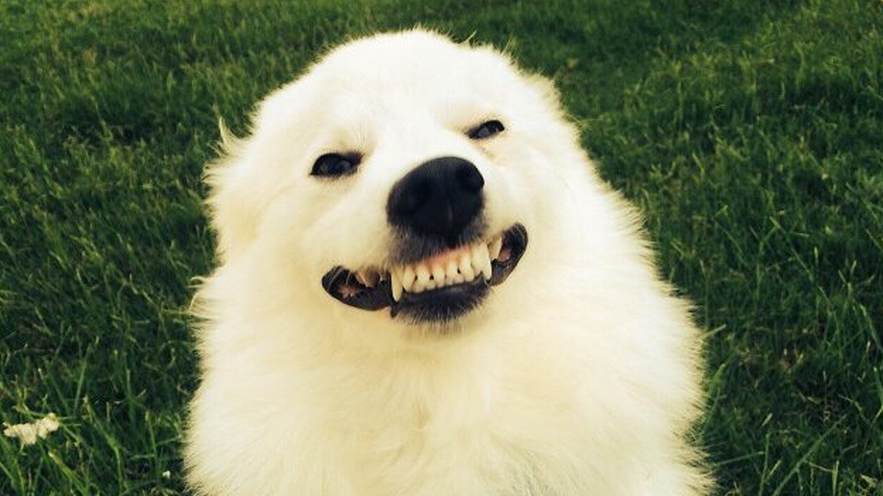 21 Dog Smiles Guaranteed To Make Your Day