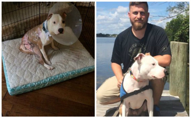 Dog Who Was Abused & Set On Fire Now Helps Veteran Cope