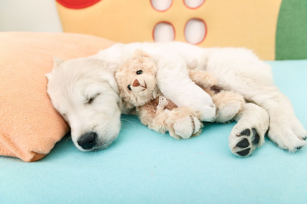 8 things pet parents can do to help dogs with joint problems