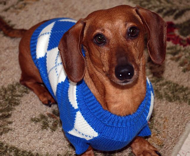 New Survey: The Most Popular Dog Breeds By U.S. Region