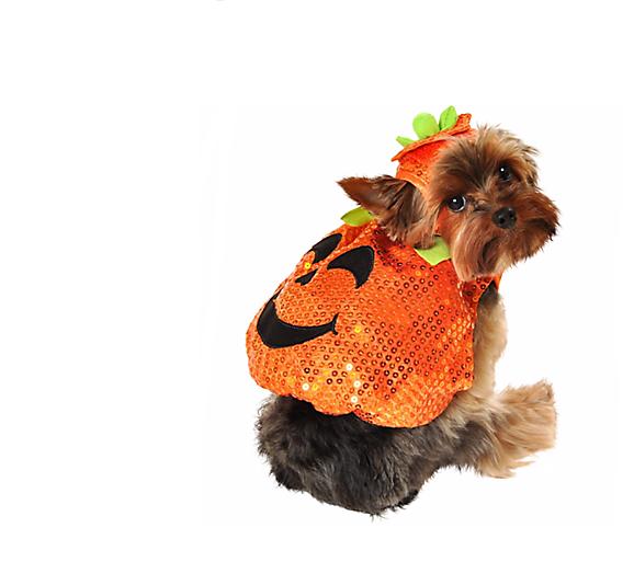 10 pumpkin  sc 1 st  iHeartDogs & 25 Trendy Dog Halloween Costumes Under $25