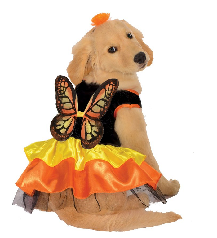 21 butterfly  sc 1 st  iHeartDogs & 25 Trendy Dog Halloween Costumes Under $25