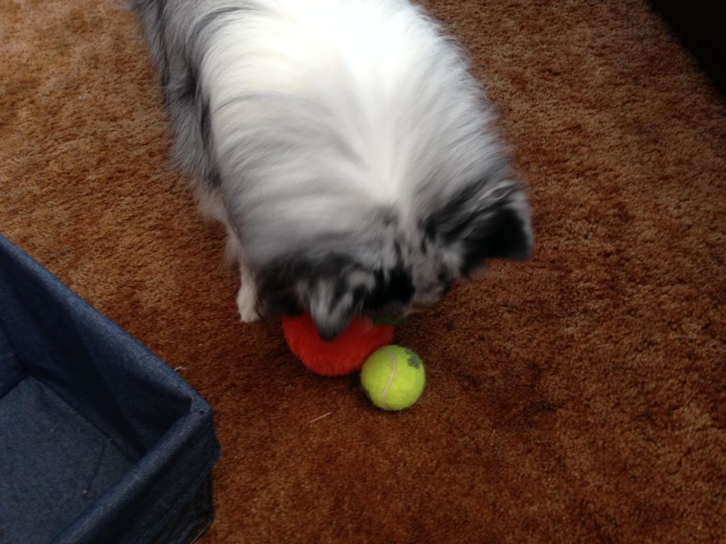 Puppy Toys For 10 And Up : How to teach your dog clean up his own toys