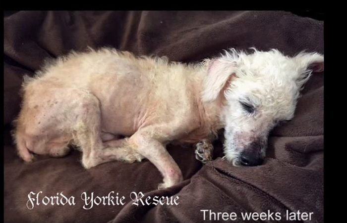 Thank You: iHeartDog com Readers (You) Helped Save This Dog's Life