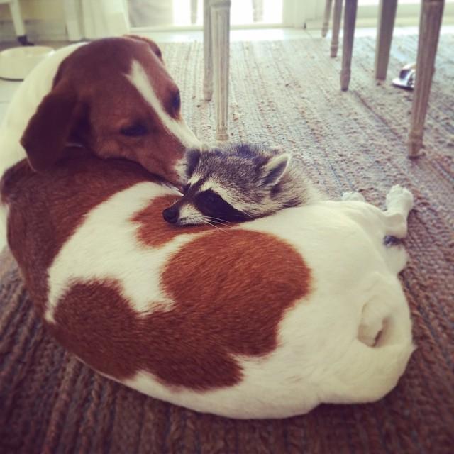 pump resting on dog