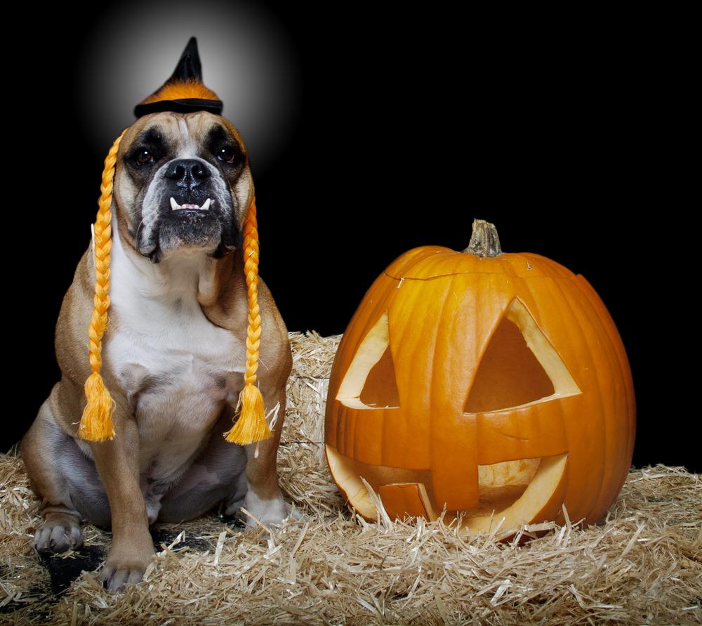 Doggie Halloween Costumes
