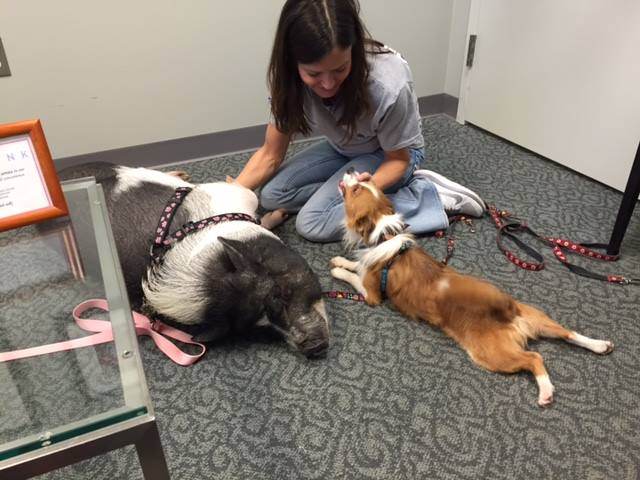 Berks Animal Rescue League Dogs