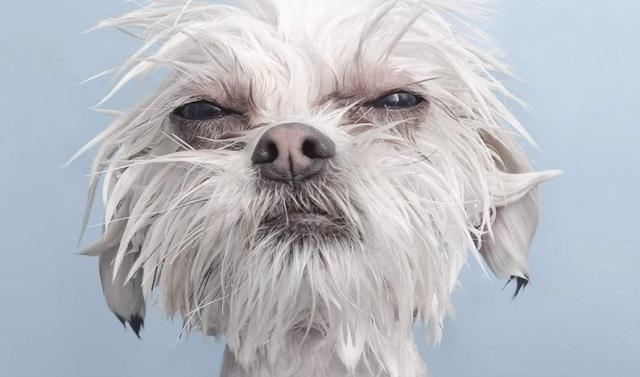 Buzzfeed S Slideshow Of Adorable Wet Dogs Will Leave You