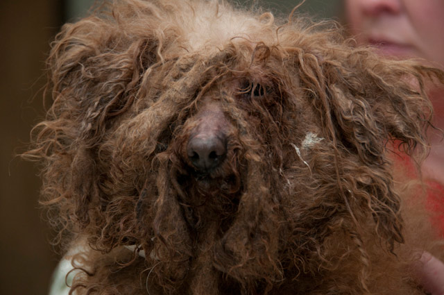 Puppy Mill Dog And Recovering Addict Now Getting Their Second Chance