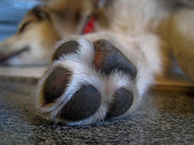 13 Fun Facts About Your Dog's Paws!