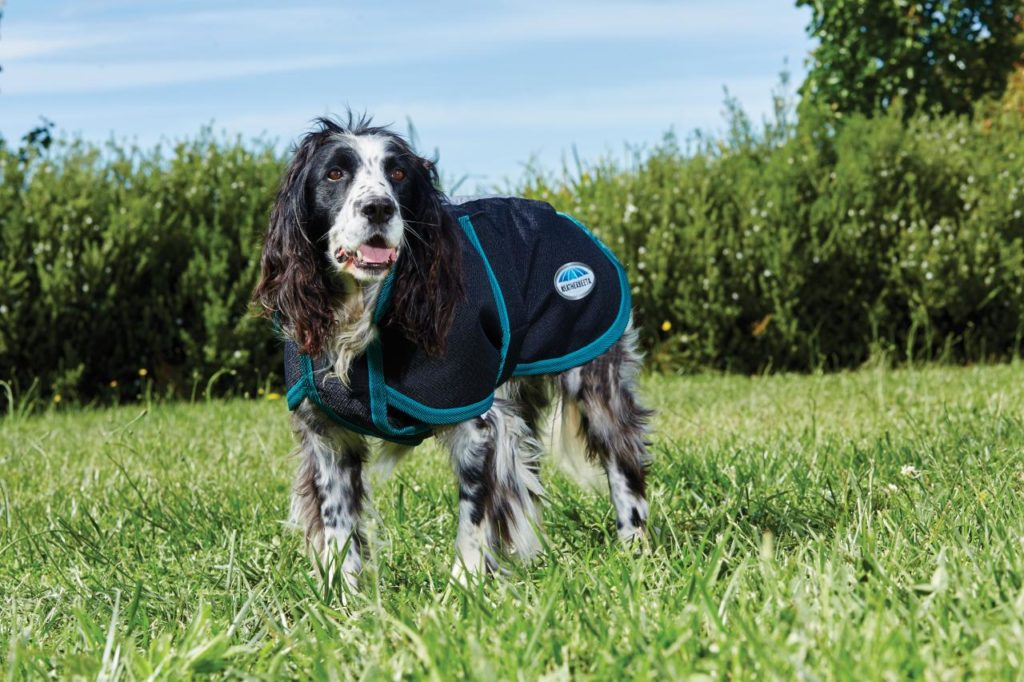 the 10 best winter coat brands to keep your pup warm in winter