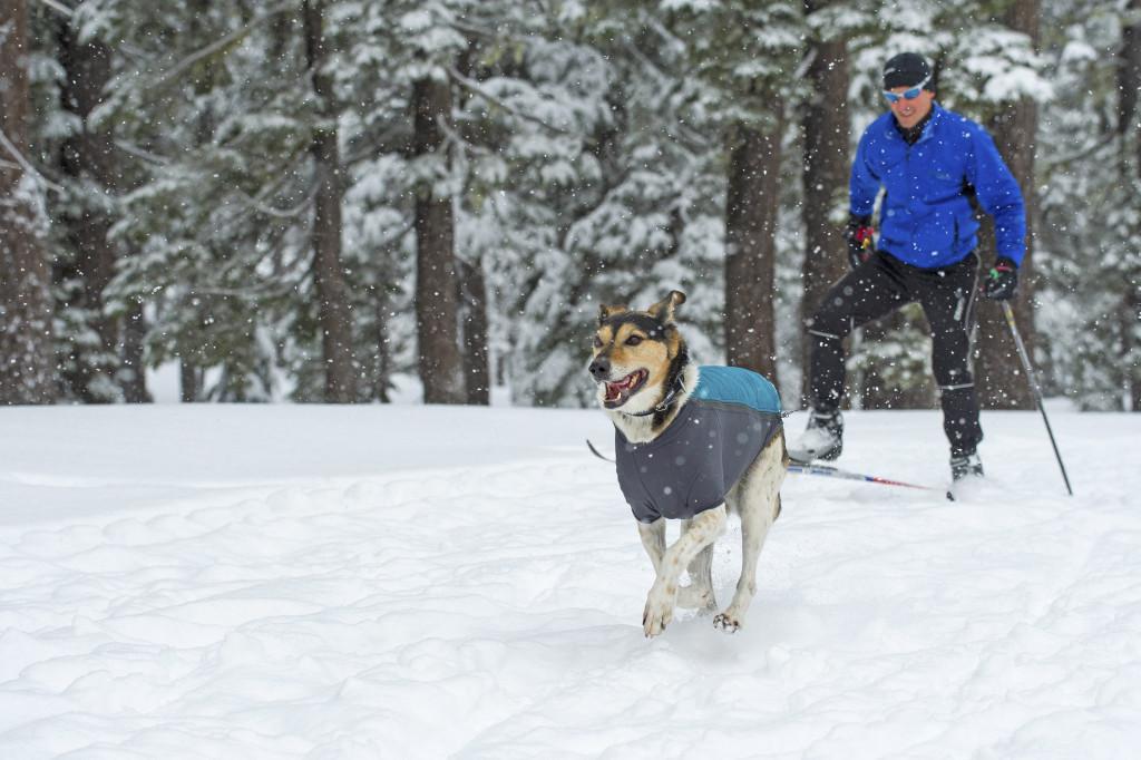 warmest dog jackets