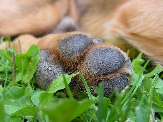 dog paw close