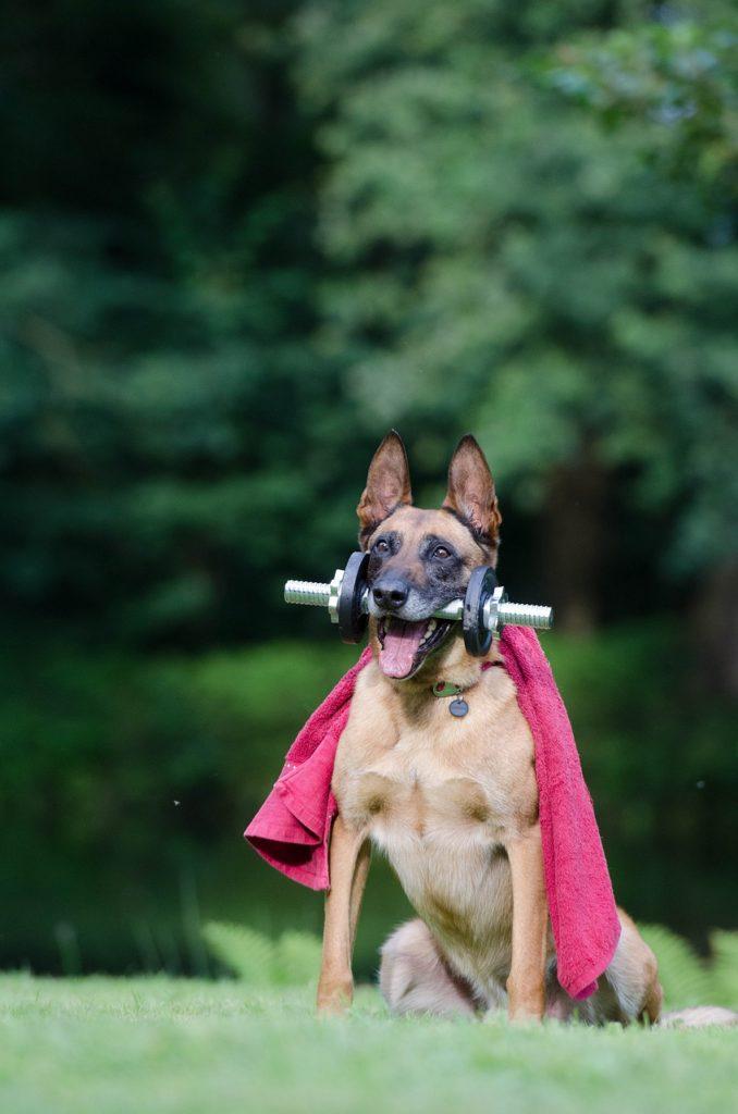 dog superhero