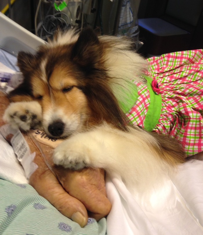 She Rescued 4 Shelties Now They Help Others Through