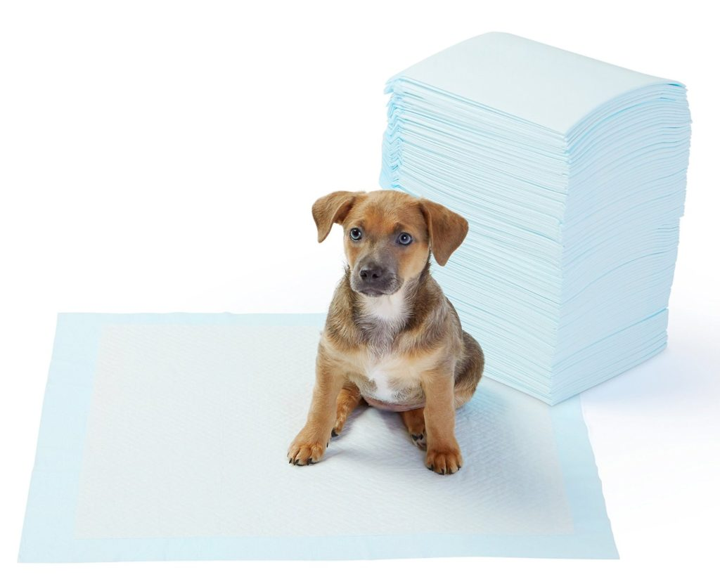 10 Tips For Potty Training A Puppy From A Professional Dog Trainer PET-icure Pet Grooming & Supplies Pepperell Massachusetts 01463 Dog Cat Grooming Pet Store Toys Treats Food
