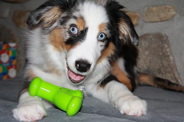 p7 dog-669206_640