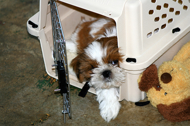 Top 10 Tips On Crate Training A Dog