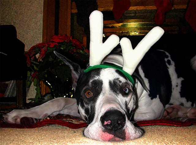 Santa S 9 Reindeer Spotted Before Christmas