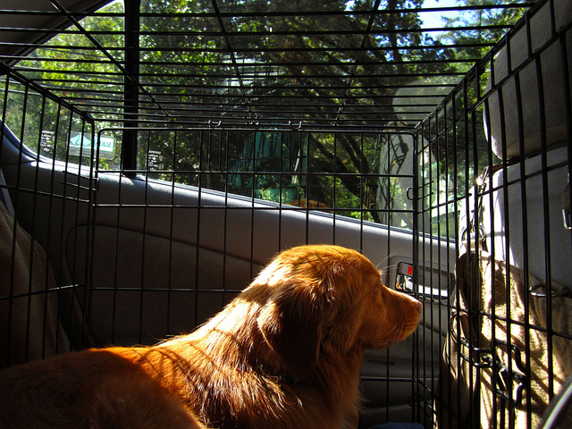 How To Get Anxious Scared Or Motion Sick Dogs Used To