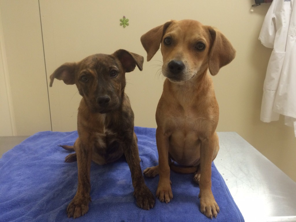 Anna and Elsa. Image Source: Pennsylvania SPCA