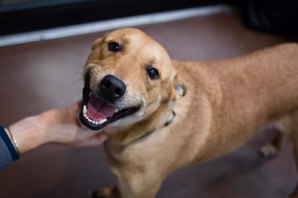 Dog Is So Happy To Be Rescued He Can T Stop Smiling