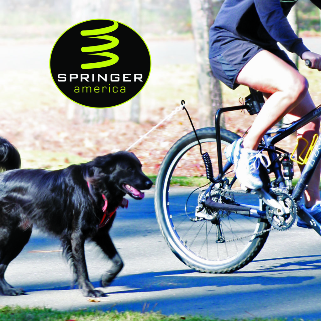 8 Tips To Get Your Dog Used To Biking