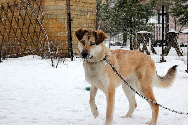 Don't leave your dog out in the cold! Not only could they get sick, but in some cities, it's against the law.