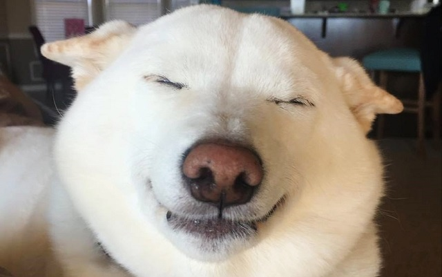 The Internet Is Mesmerized By This Dog's Squinty Smiles!