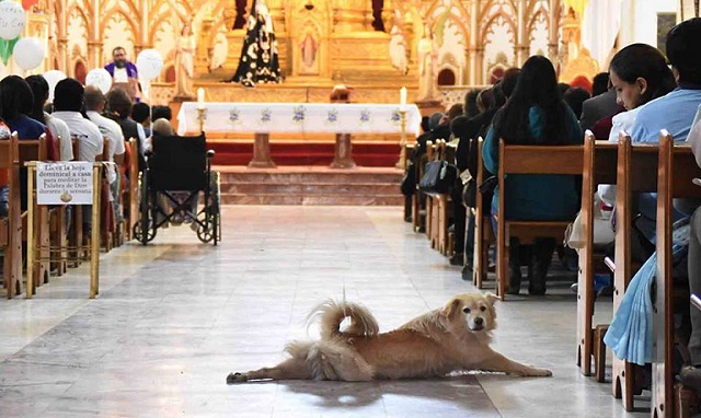 Stray Dog Crashes A Church Service For Sick Kids And Makes