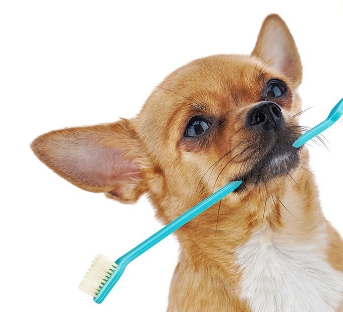 Ask A Dog Trainer: How Do I Train My Dog For Teeth Brushing?
