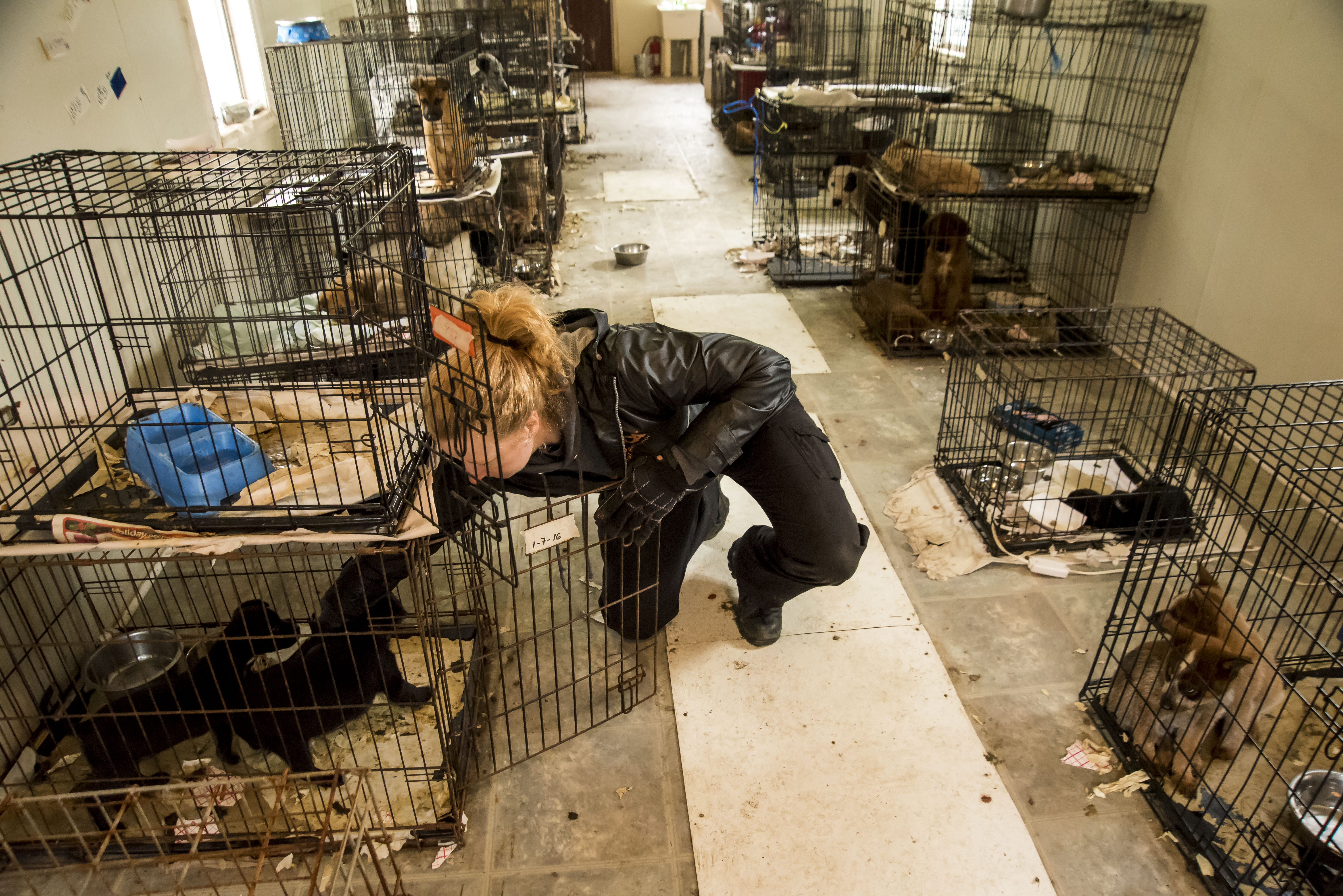 Dogs Kept In Cages All Day