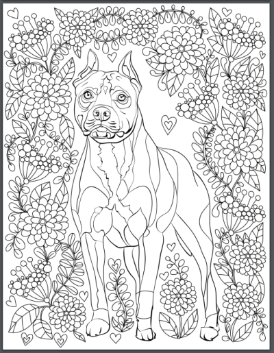 Pit Bull Adult Coloring Book Page