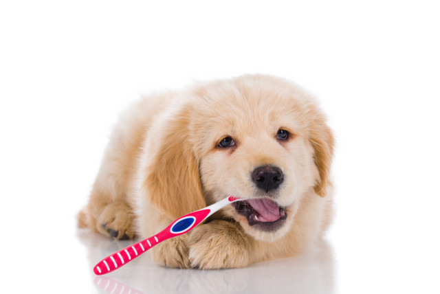 ask a dog trainer how do i train my dog for teeth