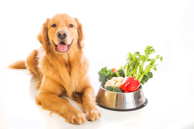 Compare Dog Food >> How Do The Top Fresh Dog Food Companies Compare
