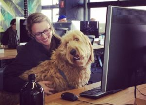 11 Firms That Let You Carry Your Canine To Work
