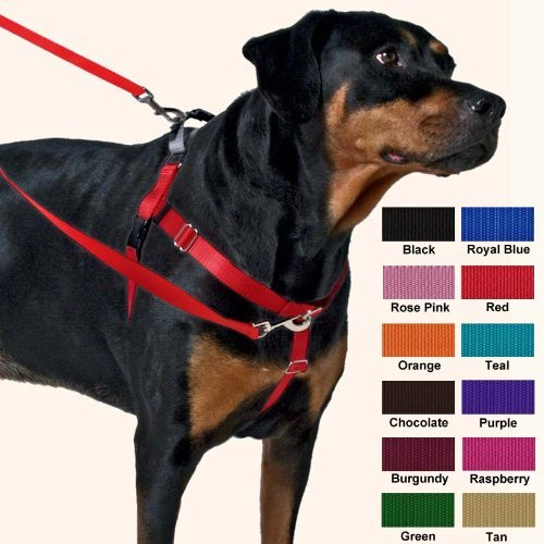 What Should You Put On A Dog Collar
