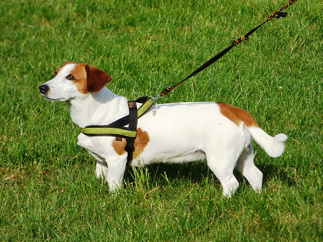 Ask A Dog Trainer: What's the Best Harness For A Dog That Pulls?