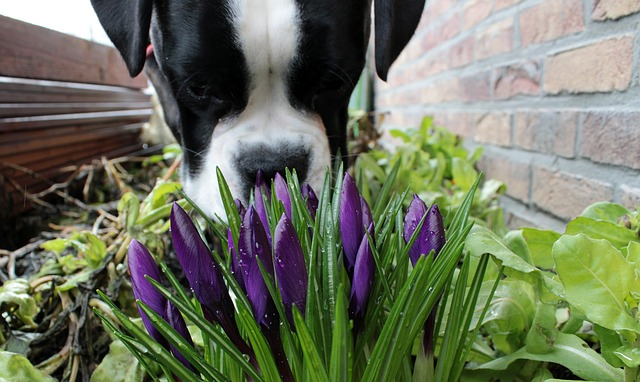 dog smell