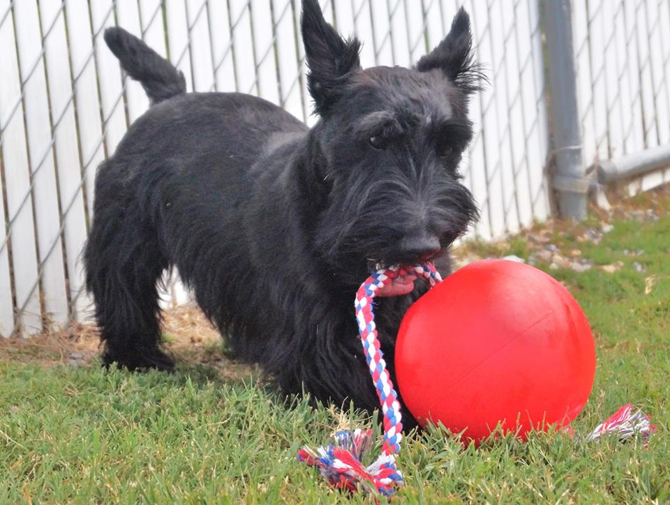 dt3 Dog-Playing-With-Tuggo-Dog-Toy