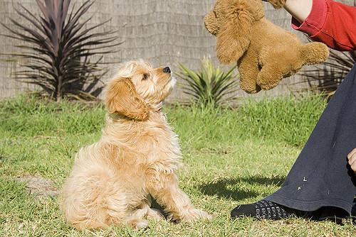 Dog Stops Eating Kibble