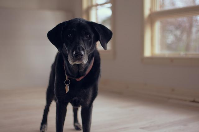 senior-dog-1149760_640