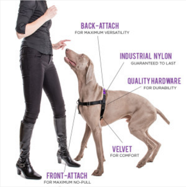 vsharness ask a dog trainer what's the best harness for a dog that pulls?