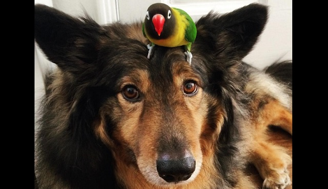 For 6 Years This Bird Has Been Hitching A Ride On His Dog