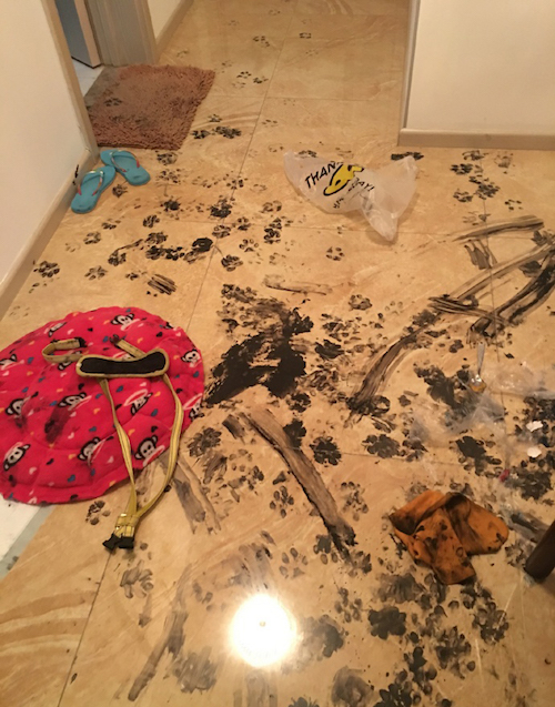 This Dog Takes Making A Mess To A New Extreme Iheartdogs Com