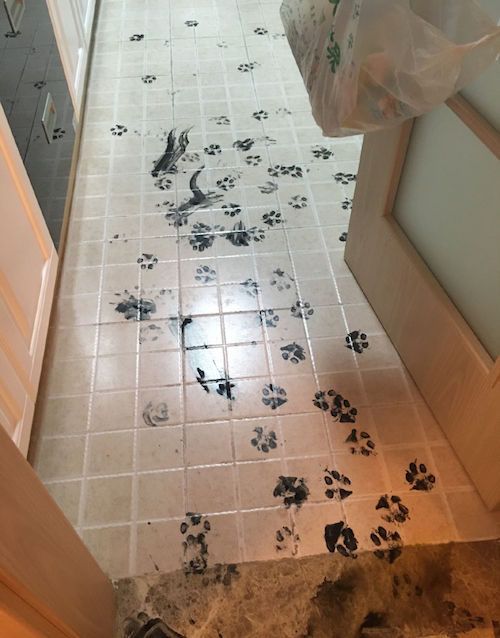 This Dog Takes Making A Mess To A New Extreme