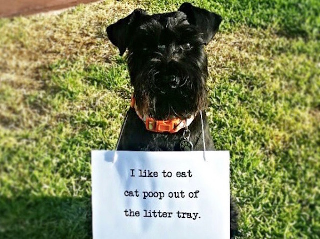 Why Does My Dog Eat Cat And Dog Poop
