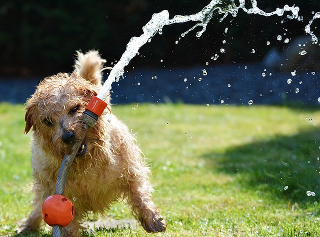 dgrooming dog-1310545_640