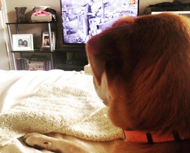 dog TV (1)